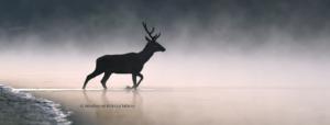 VM X. természet | fotó | kiállítás, a 10 éves Varázslatos Magyarország természet-estje